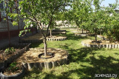 Окопка деревьев осенью. Как правильно окапывать плодовые деревья?