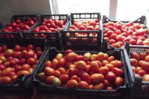 Мягкие помидоры, как переработать. Как быстро и качественно переработать томаты.