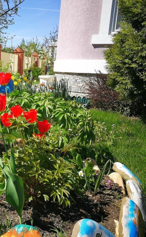 На какой год после посадки цветут пионы. Несколько советов, чтобы пионы оставались пышными и цветущими