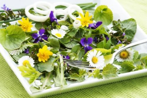 Можно ли есть листья одуванчика в сыром виде. Пожалуйста, ешьте одуванчики – или несколько съедобных садовых сорняков