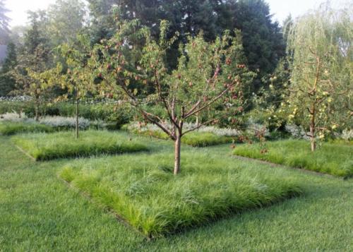 Как правильно окапывать яблони. Плюсы перекопки приствольной полосы плодового дерева