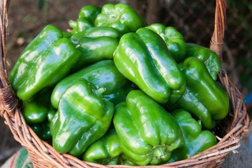 Зеленый перец острый. Сорта сладкого и острого зеленого перца