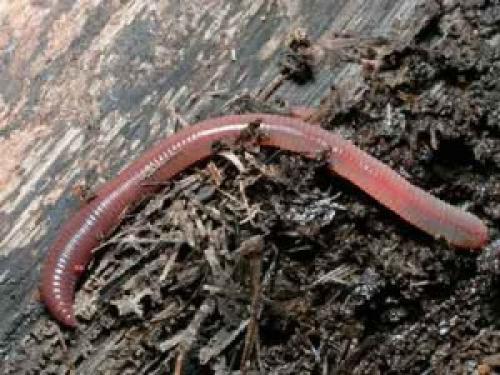 Как избавиться от червей в цветочных горшках в домашних условиях. Как избавиться от дождевых червей в комнатных горшках не химическим способом.