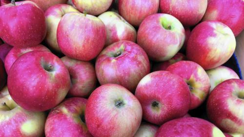 Сорта зимних яблок. Всё про зимние сорта яблок