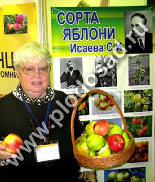 Яблоня кипарисовое описание. Сорта яблони С.И. Исаева