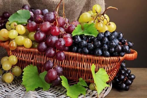 Лучшие столовые сорта винограда. Лучшие сорта винограда: фото, названия и описания (каталог)